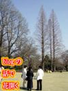 Dsc02317b_1
